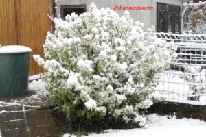 Garten2019.05.04_4