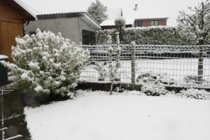 Garten2019.05.04_6