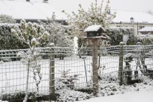 Garten2019.05.04_8