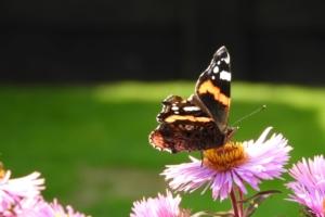 Unser-Garten_2019.09.15-005